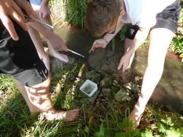 Schüler untersuchen, welche Kleinstlebewesen unter den Steinen im Wasser leben